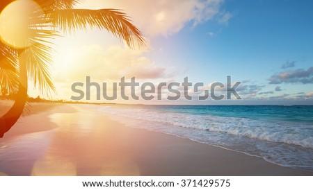 coco · árvore · nascer · do · sol · Tailândia · água · pôr · do · sol - foto stock © master1305