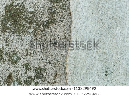 cracked eucalyptus trunk wood texture Stock photo © lunamarina