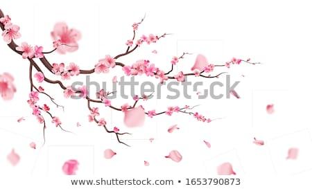 アプリコット 桜 花 美しい ツリー 咲く ストックフォト © joyr
