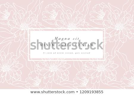 Chrysanthemum flowers background Stock photo © vtls