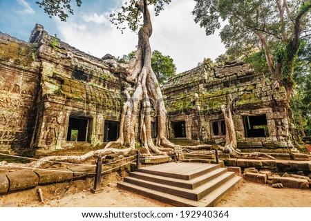 Oude ruines boom wortels tempel angkor Stockfoto © dmitry_rukhlenko