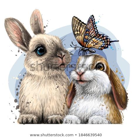 dronken · cartoon · konijn · illustratie · naar - stockfoto © ekapanova