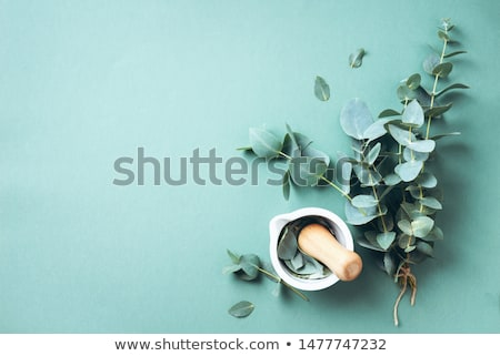 homeopáticos · estância · termal · medicina · flor · secar · pétalas - foto stock © gitusik