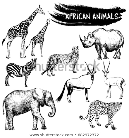 elephants and gemsbok stock photo © dirkr