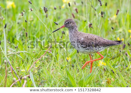 Olhando refeição fundo pássaro pernas lago Foto stock © chris2766