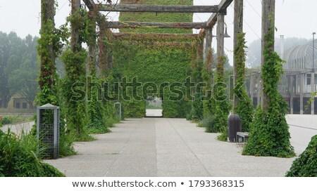 pergola with vines stock photo © fotografiche