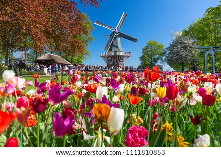 tulipa · campo · jardins · jardim · de · flores · flor · paisagem - foto stock © master1305