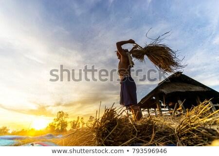 фермер · сцена · иллюстрация · улыбка · трава - Сток-фото © rastudio