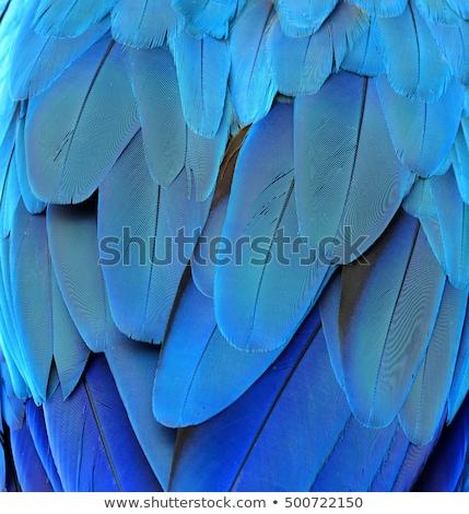 égő · Phoenix · gyönyörű · illusztráció · izolált · fekete - stock fotó © blackmoon979
