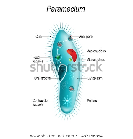 wetenschap · microscoop · Rood · scholen · drie · lens - stockfoto © bluering