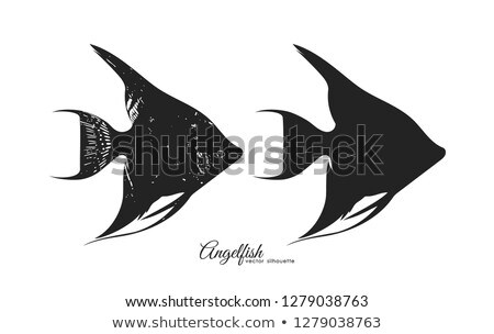 Scalar aquarium fish isolated on white graphic Stock photo © robuart