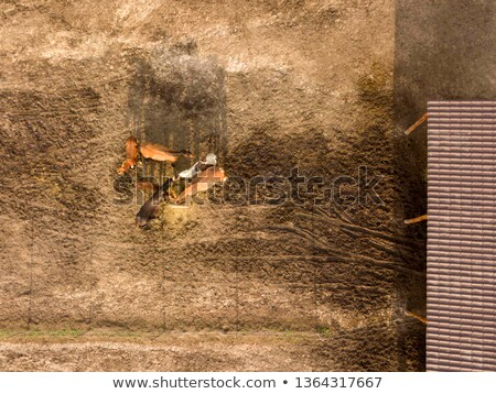 馬 食べる 新鮮な 乾草 木製 ボックス ストックフォト © artjazz