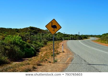Emu Crossing Road Stock photo © THP