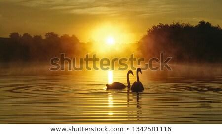 Paire aube romantique famille amour nature Photo stock © nature78