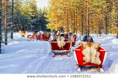 Reindeer in winter at the polar circle. Stock photo © RuslanOmega
