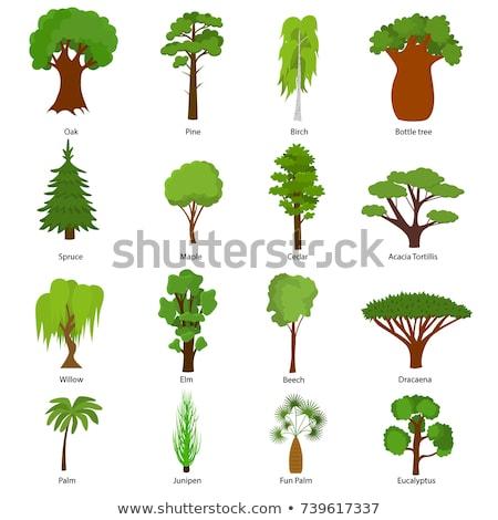 vert · nature · palmier · arbres · paysage · beauté - photo stock © lunamarina