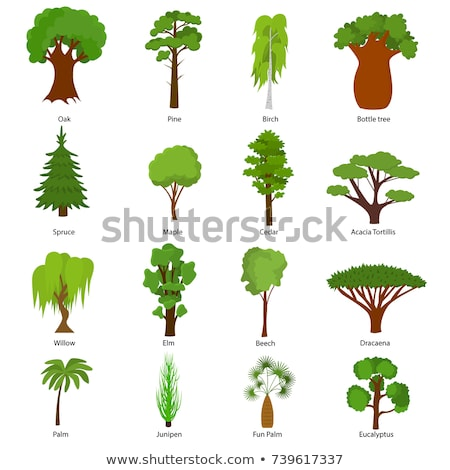 verde · naturaleza · palmera · árboles · paisaje · belleza - foto stock © lunamarina