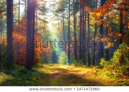 Pad groene bos manier leidend jonge Stockfoto © hraska