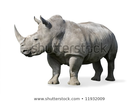 Isolated Profile of a Rhinoceros stock photo © feverpitch