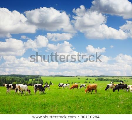 kırsal · sahne · siyah · inek · kahverengi · buzağı · mavi · gökyüzü - stok fotoğraf © meinzahn