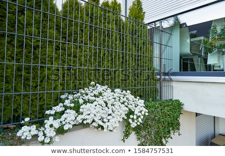 白 花 ぬれた 花 水 ストックフォト © stocker