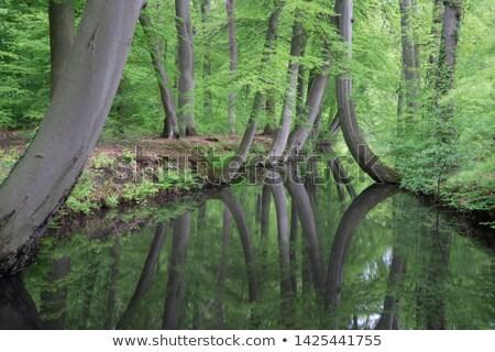 саду пейзаж Голландии мнение голландский место Сток-фото © compuinfoto