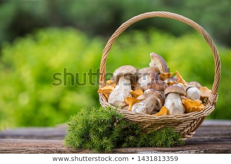 porcini and chanterelles Stock photo © ozaiachin