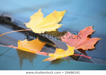 fallen maple leaves on car cowl Stock photo © Paha_L