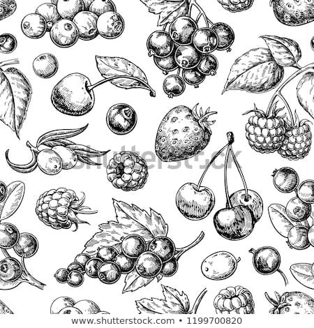 vintage cranberry label on seamless pattern stock photo © conceptcafe