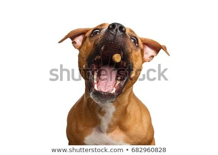 Cão de caça cão grama saco animal Foto stock © phbcz