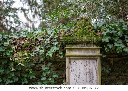 Starych nagrobek drzewo kamień martwych religii Zdjęcia stock © IS2