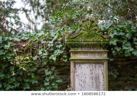 Vieux pierre tombale arbre pierre morts religion Photo stock © IS2