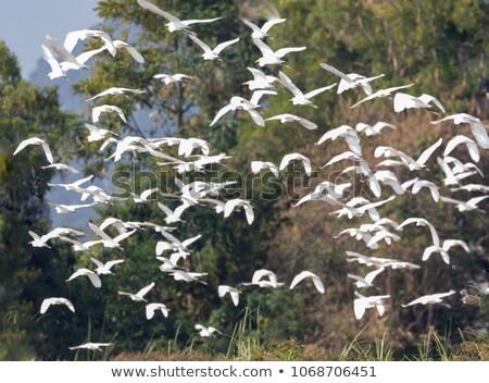 Kócsag madár repülés égbolt illusztráció háttér Stock fotó © bluering