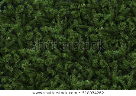 christmas backdrop with fir tree branch stock photo © karandaev