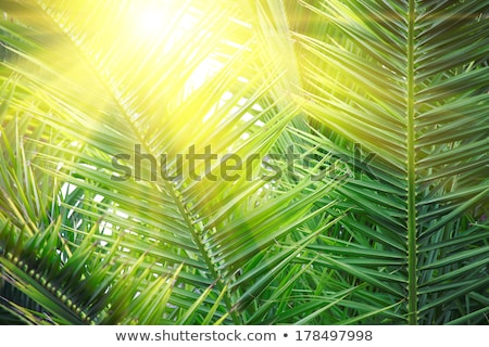 palmblad · groene · abstract · achtergrond · leven - stockfoto © artjazz