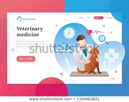 Clinica atterraggio pagina veterinaria servizio Foto d'archivio © RAStudio