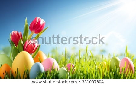 Easter background with tulips and eggs Stock photo © furmanphoto