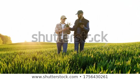 Farmer in green wheat field in spring examining plants Stock photo © simazoran