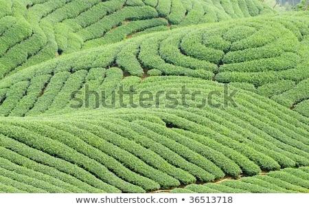Complex landform and tea trees Stock photo © Ansonstock