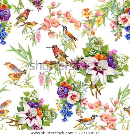 Renk kuşlar çiçekler beyaz doğum günü arka plan Stok fotoğraf © Elmiko