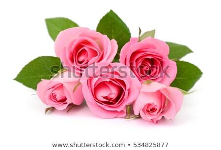 Pink flower of rose on a green stalk Stock photo © boroda