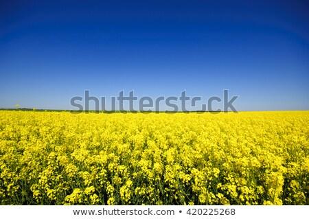 nemi · erőszak · mező · termés · virág · zöld · mezőgazdaság - stock fotó © yoshiyayo