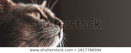 Cat with banner Stock photo © Shevlad