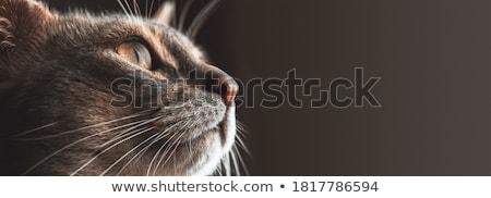 macska · - · mosoly · kommunikáció · vicces · fehér - stock fotó © Shevlad
