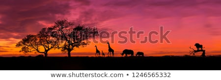 african sunset stock photo © ecopic