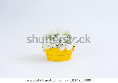 Blanche fleurs sauvages rose pot à fleurs printemps Photo stock © Julietphotography