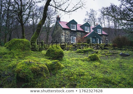old house in the woods Stock photo © sirylok