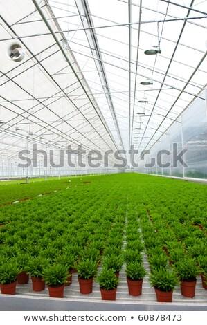 broeikas · veel · bamboe · planten · interieur - stockfoto © ivonnewierink