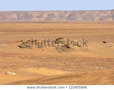 rond · woestijn · landschap · historisch · oase · Egypte - stockfoto © prill