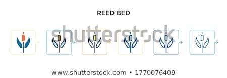 Water Reeds 2 Stock photo © chrisbradshaw